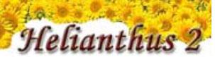 Helianthus 2