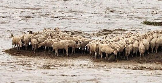 Raccolta fondi per le vittime dell'alluvione in Sardegna